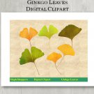 Ginkgo Leaf Clipart Digital Leaf PNG Digital Images Realistic Ginkgo Leaf Graphics Printables