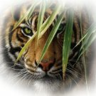 TIGER Design SHOWER CURTAIN Bath  Made in USA