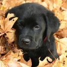 Puppy Training The Natural Way