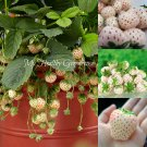 "SEEDS - RARE! Pineapple flavored strawberry! ""White Alpine"" Pineberry! Grow them all summer!"