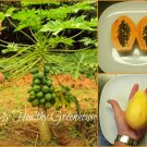 "SEEDS - Exotic Dwarf Papaya tree ""Solo Sunrise"" Mature height of only 6-8 feet!"