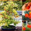 "SEEDS – Dwarf Persimmon ""Saijo"" Heavy Bearing Fruit Tree, Ideal for Small Spaces."