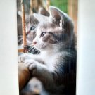Infrared Heater Image Flexible Wall-Hung Heating Panel ECONOMY Picture CAT