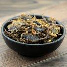 Quan Xie 50pcs Scorpion Dry Polypides of Buthus Martensii Karsch