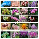 Guarantee 24 Types Perennial Phalaenopsis Orchid Flower Seeds for your Mix Color