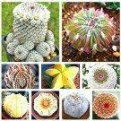 Guarantee 200 Mix Varieties Lithops Seeds
