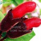 Guarantee Rare Flower Lipstick 100 seeds