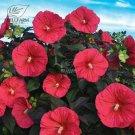 20 Pcs Hibiscus Rosa-sinensis Perennial Flower Seeds Big Blooms MXT10