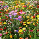 Lot All Perennial Wildflower Mix 15 Species Flowers 400 Seeds Ship From USA