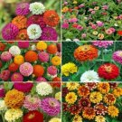 Zinnia Flower Seed Mix 6 Species 75 Seeds Ship From USA
