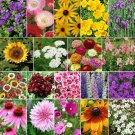 Late Bloomer Wildflower Mix 500 Seeds Ship From USA