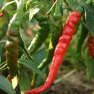 Cayenne Long Red Thin Pepper Seeds NON-GMO 50 Seeds Ship From USA