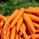 Tendersweet Carrot Seeds Beta Carotene Vitamin A NON-GMO 600 Seeds Fast Ship From USA