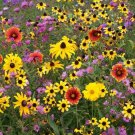 300 Seeds USA Product WAHPE WASHTEMNA Seeds Bee Balm Bergamot Monarda American Native Wildflower