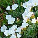 "1000 Seeds USA Product CALIFORNIA POPPY ""BALLERINA"" MIX Seeds White Orange Rose Yellow Scarlet"