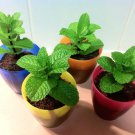 50 Seeds USA Product PURPLE DE MILPA TOMATILLO Seed Organic Non-gmo Salsa Tex-Mex GardenContainer