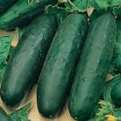 30 FRESH HEIRLOOM SLICING CUCUMBER MARKETMORE 76 USA SEEDS  Ship From USA