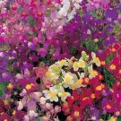 TOADFLAX FLOWER MIX BABY SNAPDRAGON 500 FRESH USA SEEDS  Ship From USA