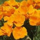100 ORANGE POPPY FLOWER USA SEEDS  POPPY SEED