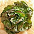 1 oz - 5 lb Bulk BRONZE MIGNONETTE LETTUCE Butterhead Lactuca Sativa SeedsShip From USA