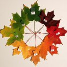 25 SUGAR MAPLE SYRUP TREE Native Rock Fall Color Acer Saccharum Seeds *Comb S/HShip From USA