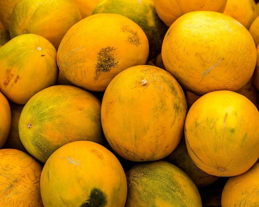 25 KOLKHOZNITSA MELON Collective Farm Woman Cucumis Melo Russian Fruit SeedsShip From USA