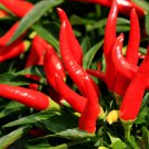 300 THIN CAYENNE PEPPER Hot Chili Long Green Red Slim Capsicum Vegetable SeedsShip From USA