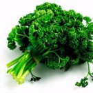 3000 TRIPLE CURLED PARSLEY Petroselinum Hortensis Herb Vegetable Seeds *Comb S/HShip From USA