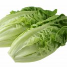 3000 LITTLE GEM LETTUCE Small ROMAINE Butterhead Lactuca Sativa Vegetable SeedsShip From USA