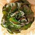 3000 BRONZE MIGNONETTE LETTUCE Butterhead Lactuca Sativa Vegetable Seeds *CombSHShip From USA