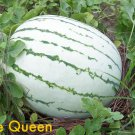 50 DIXIE QUEEN WATERMELON White & Red Citrullus Lanatus Melon Fruit Vine SeedsShip From USA