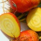 30 BURPEE'S GOLDEN BEET Beta Vulgaris Yellow Root Vegetable Seeds *Combined S/HShip From USA