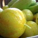 100 LEMON CUCUMBER Cucumis Sativus Fruit Vegetable Seeds *Combined S/H & Gift!Ship From USA