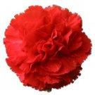 50 SCARLET RED CARNATION Dianthus Caryophyllus Flower Seeds + Gift & Flat ShipShip From USA