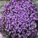 Guarantee 1000 Seeds PURPLE ROCKCRESS Flower Seed Perennial Groundcover Borders Basket Drought