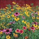 Guarantee 2000 Seeds ALL BUTTERFLY FLOWER MIX 21 Different Flower Seeds Perennial/Annual Nector