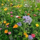 Guarantee 2000 Seeds DEER RESISTANT WILDFLOWER MIX 15 Different Flower Seeds Butterflies Bees
