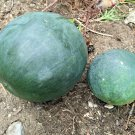 Guarantee 40 Seeds SUGAR BABY(Lunch Box)WATERMELON Seeds Non-Gmo Organic 5-9lbs Garden/Container