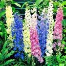 Guarantee 450 Seeds LARKSPUR IMPERIAL MIX Seeds Blue Purple Pink White Flower Arrangements