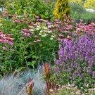 Guarantee 2000 Seeds ALL PERENNIAL WILDFLOWER MIX 17 Different Flower Seeds Butterflies Garden