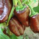 Guarantee 100 Seeds CHOCOLATE BEAUTY SWEET BELL PEPPER Seeds Non-Gmo Organic Garden