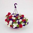 Guarantee 200 Seeds PETUNIA HYBRIDA MIX Flower Seeds Hanging Baskets Beds Window Box Container