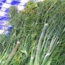 Guarantee dill DUKAT snip DILL WEED fresh herb 315 SEEDS