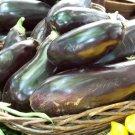 Guarantee eggplant BLACK BEAUTY HEIRLOOM 100 seeds *