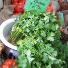 Guarantee cilantro CORIANDER CHINESE PARSLEY herb 45 SEEDS