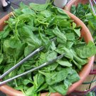 Guarantee spinach BLOOMSDALE LONG STANDING 230 seeds