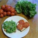 Guarantee tomato ARKANSAS TRAVELER heirloom 10 SEEDS