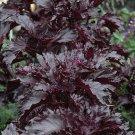 Guarantee basil PURPLE RUFFLES dark purple BASIL 105 seeds   *