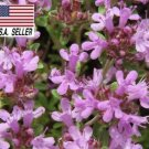 Guarantee CREEPING THYME 1000 Seeds PURPLE GROUNDCOVER LAWN DROUGHT ARID HERB PERENNIAL