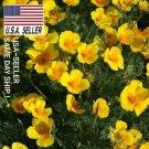 Guarantee 250 Seeds CALIFORNIA POPPY SEEDS  GOLDEN WEST